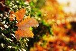 Jesień, kolorowe liście