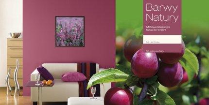 Salon, paleta kolorów Barwy natury