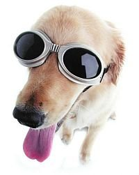 okulary słoneczne dla psa