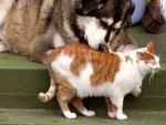 otyłość zwierząt
