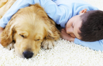 Jak usunąć sierść z dywanów